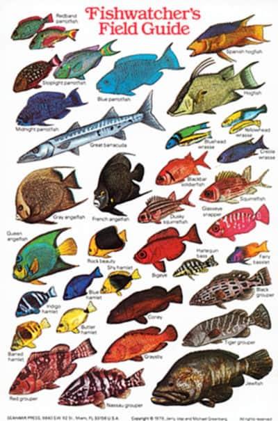 Caribbean/FL Fish ID Card (Fishwatchers)