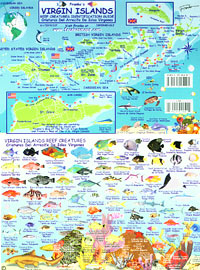 Virgin Islands Reef Creatures ID Card