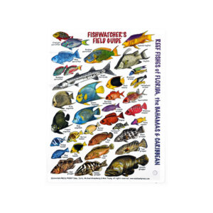 Caribbean/FL Fish ID Card (Fishwatchers)