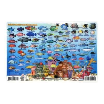 Virgin Islands Reef Creatures ID Card
